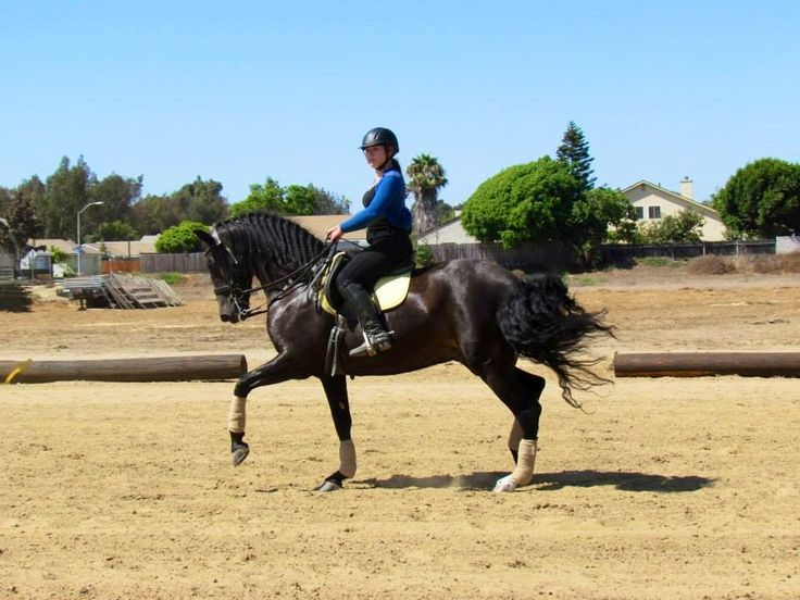 The Best 10 Horseback Riding in Fresno, CA